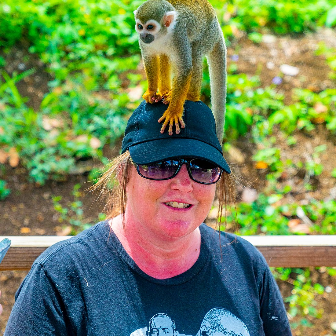 interacting with friendly monkey at monkey jungle park