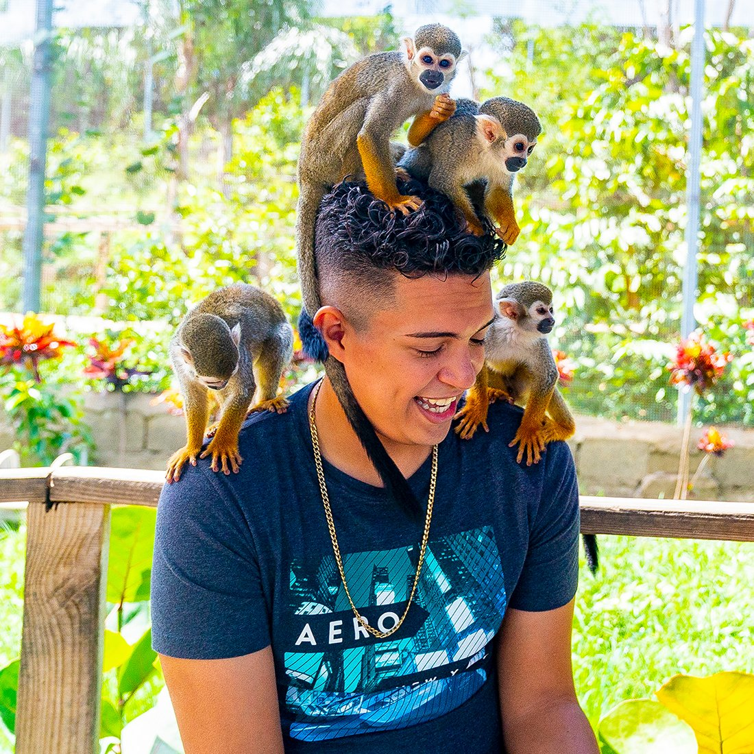 Interacting with monkeys at monkey jungle