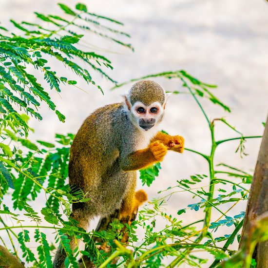 monkey in the jungle park
